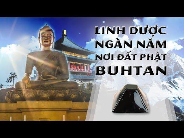 Linh  dược Hỷ Lai Chi -  Tặng phẩm của Phật Dược Sư thời Mạt Pháp