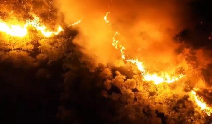 Cháy rừng ở huyện Nghi Xuân - Hà Tĩnh
